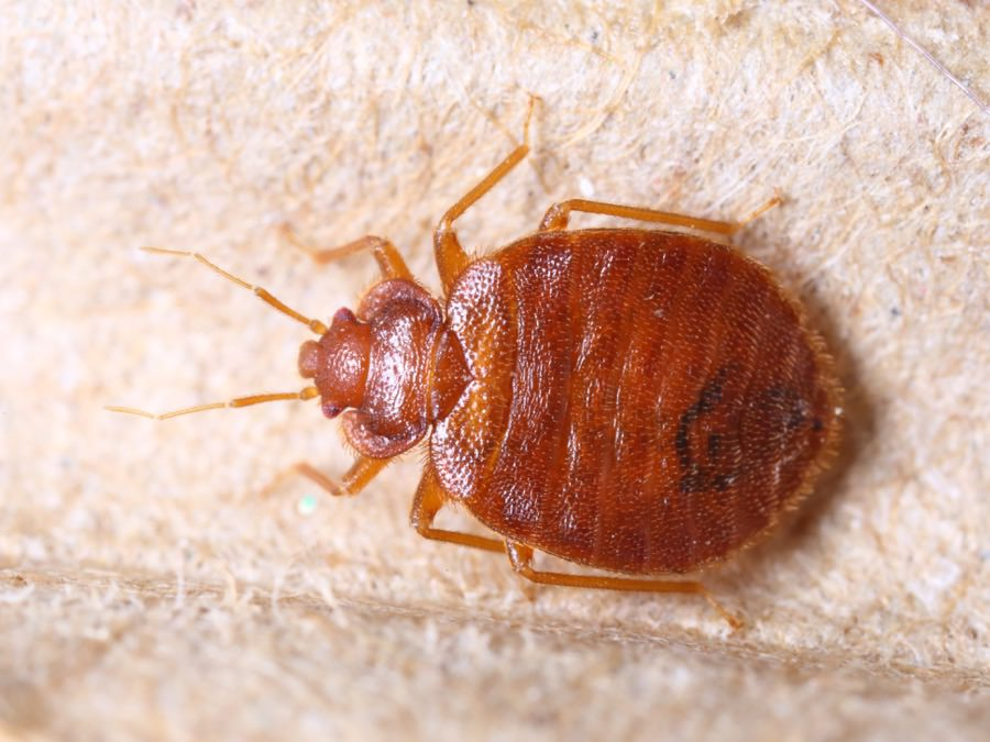 Bed Bug Control New Jersey